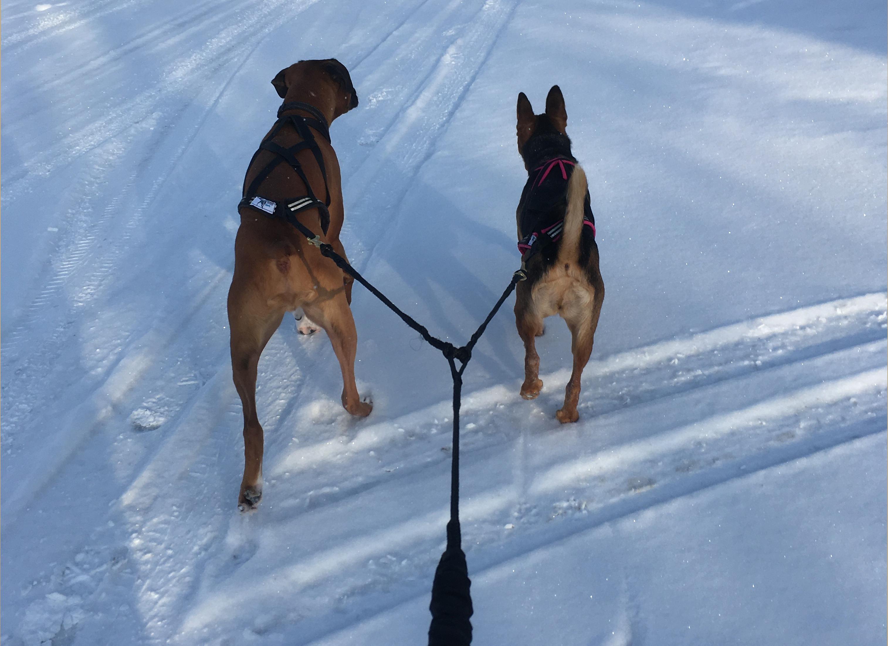 Les chiens d'Elisabelle