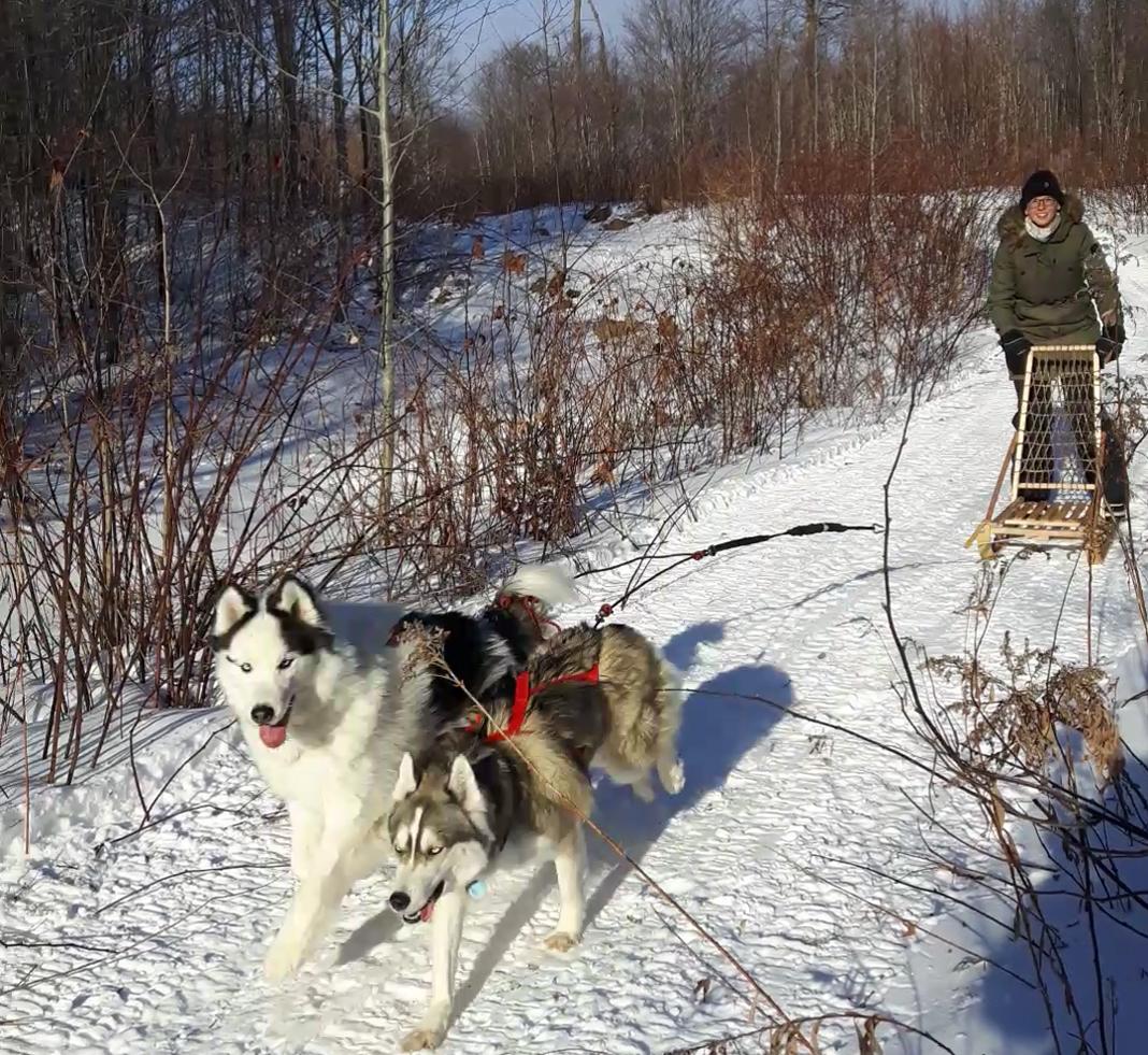 Marie-Josée Gunville avec ses chiens en traineau